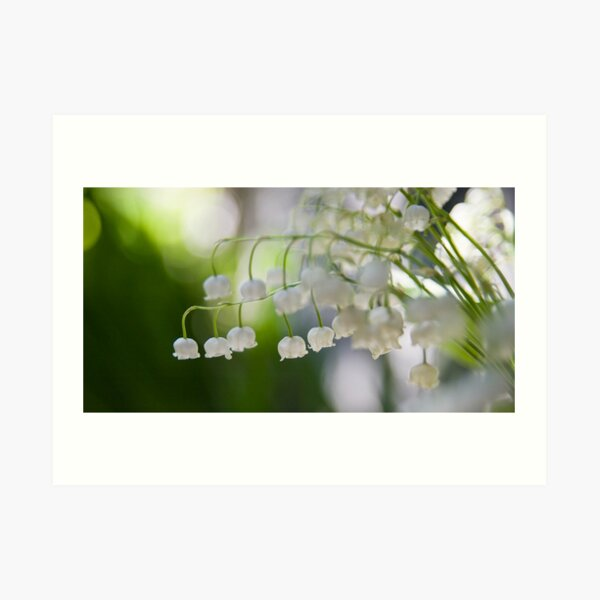 Lily of the valley panorama Art Print