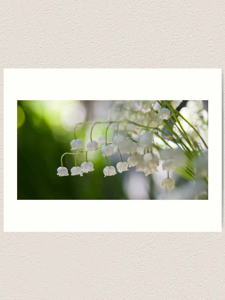 Alternate view of Lily of the valley panorama Art Print