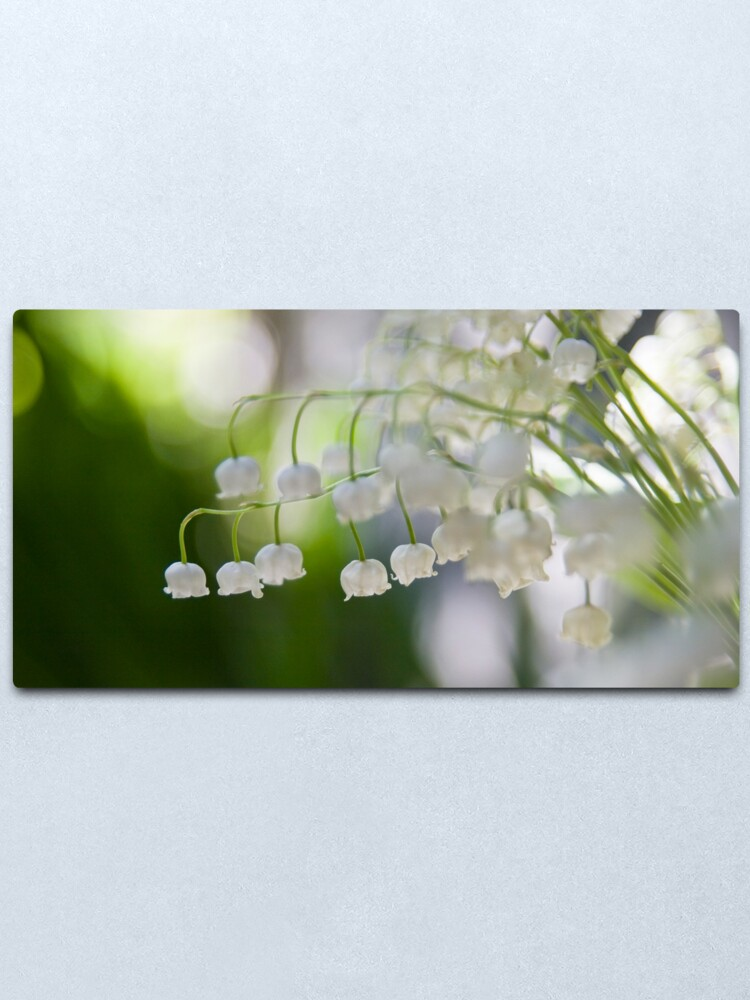 Alternate view of Lily of the valley panorama Metal Print