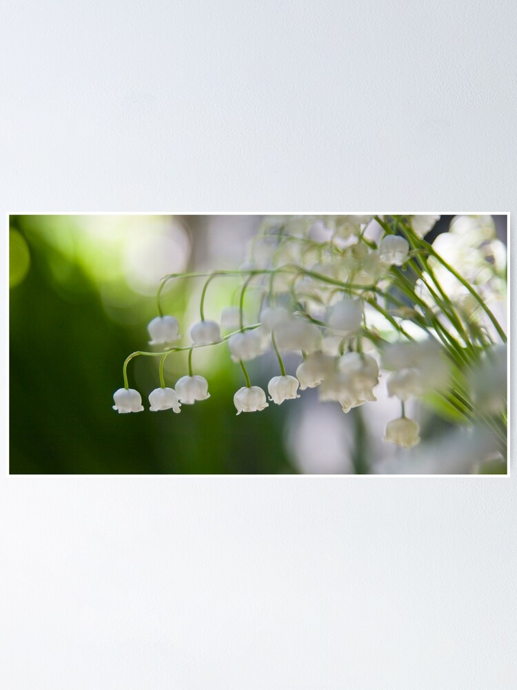 Alternate view of Lily of the valley panorama Poster