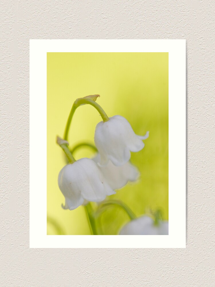 Alternate view of Lily of the valley closeup Art Print