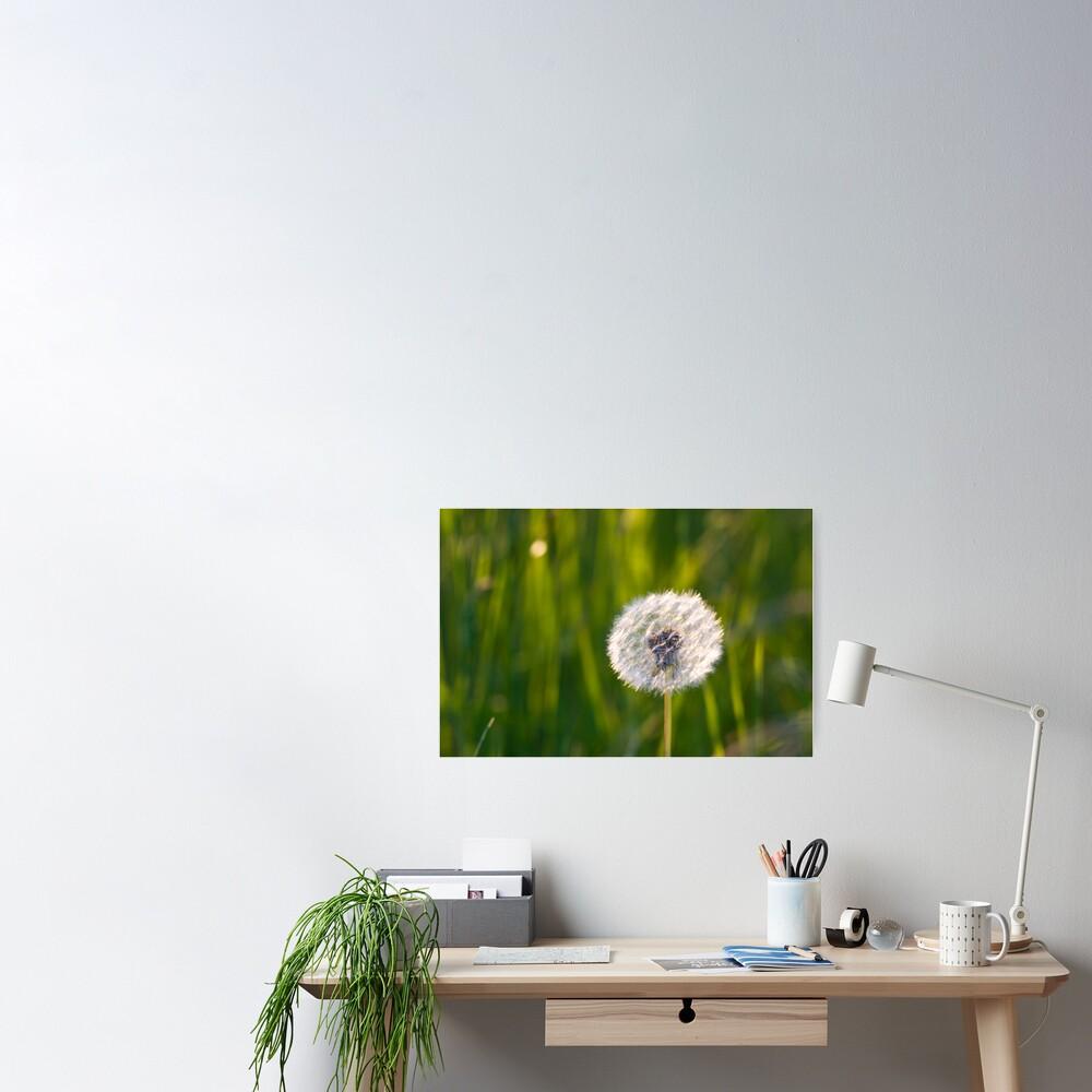 The lone dandelion Poster