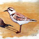 Snowy Plover Oregon Shorebird Acrylic Painting by Chriss Pagani