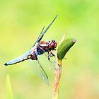 Wings of wonder by missmoneypenny