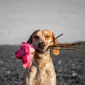 Dog Holding Pink Flowers by WInc2017