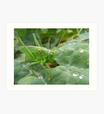 Great Green Bush Cricket Art Print
