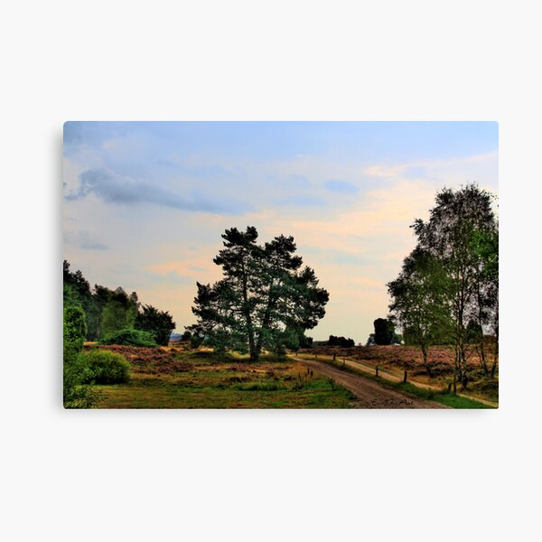 Heideweg Canvas Print