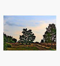 Heideweg Photographic Print