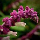 Fuzzy Wildflower Up Close by Lynda Anne Williams