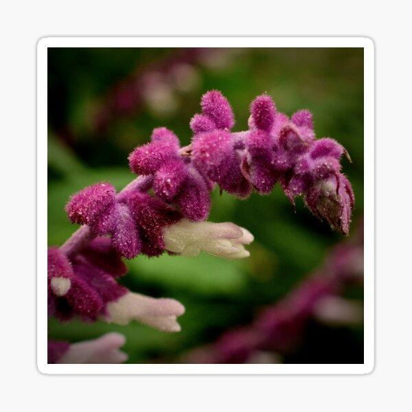 Fuzzy Wildflower Up Close Sticker
