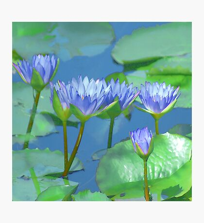 Water Colored Lilies Photographic Print