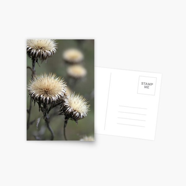 Trio ( from wild flowers collection)  Postcard