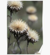 Trio ( from wild flowers collection)  Poster