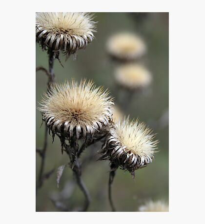 Trio ( from wild flowers collection)  Photographic Print