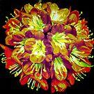 MY ORANGE CLIVIA by Peaches1950