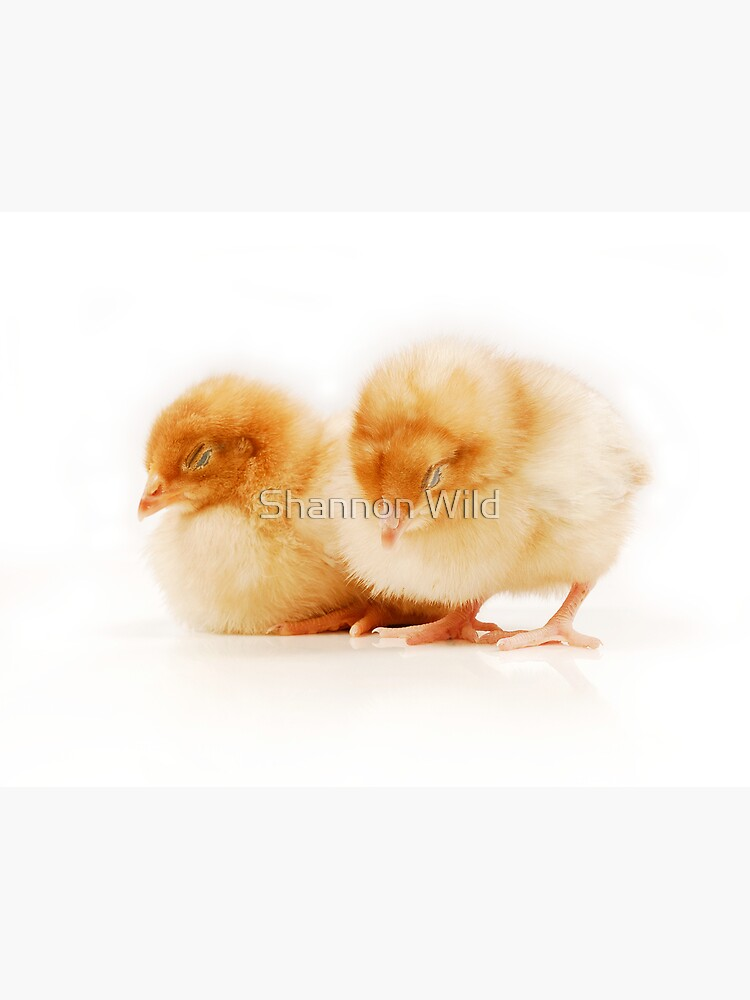 Pair of sleeping chicks by ShannonPlummer