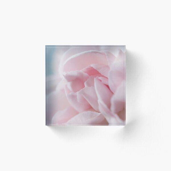 Pink Carnation Acrylic Block