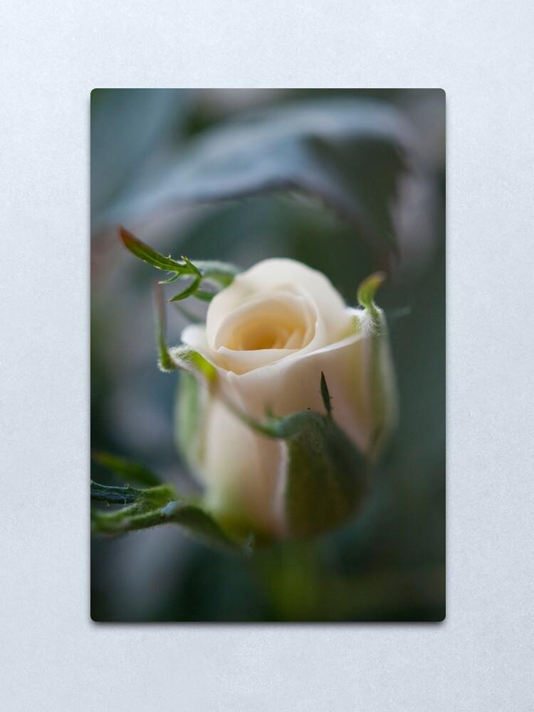 Alternate view of White Rose Metal Print