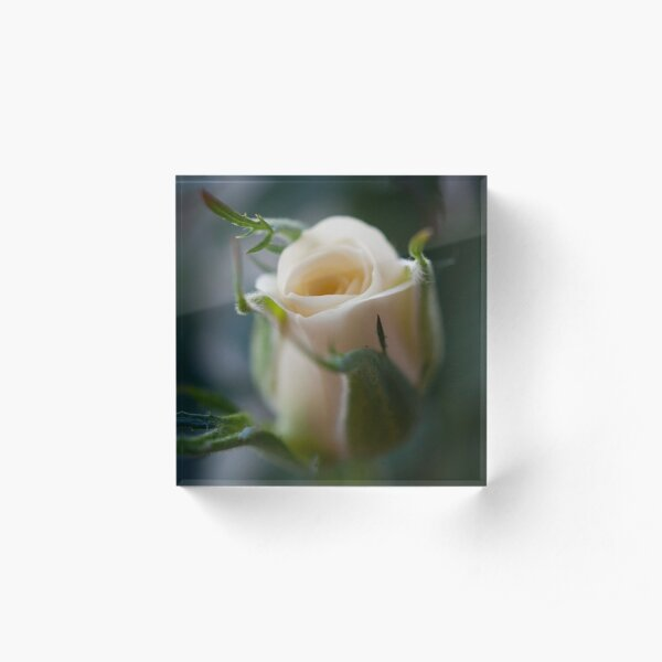 White Rose Acrylic Block