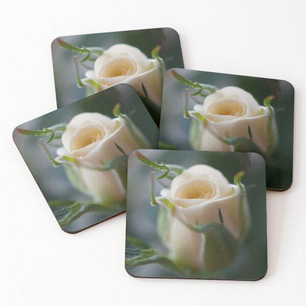 White Rose Coasters (Set of 4)