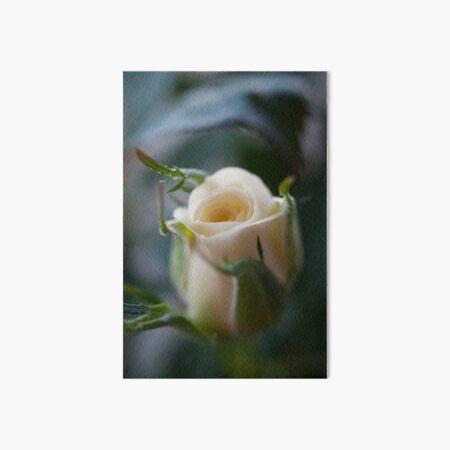White Rose Art Board Print