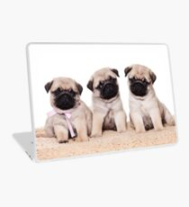 Three pug puppy Laptop Skin
