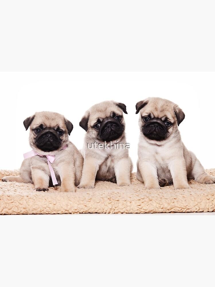 Three pug puppy by utekhina