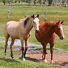 Horses in the field, Utah by FranWest