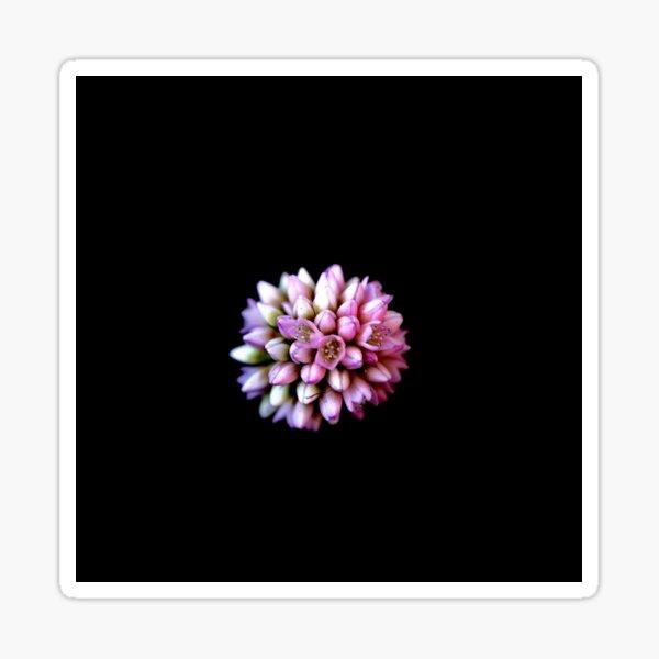 Solo Bloom On Black Sticker