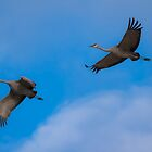One Flight For Two by Alla Gill