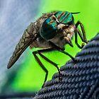 Horsefly Macro photograph by Jon Shore