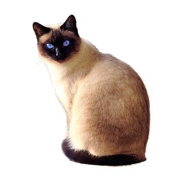 Cute Siamese Kitty  by tamagothings