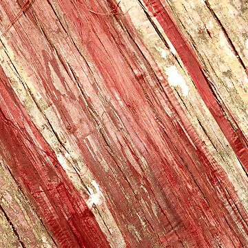 Wood texture by gavila