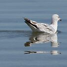 Swimming seagull by lenses-and-ink
