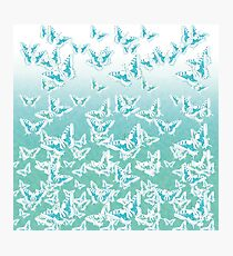 blue butterflies in the sky Photographic Print