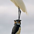 The Egret And The Owl by Jon Staniland