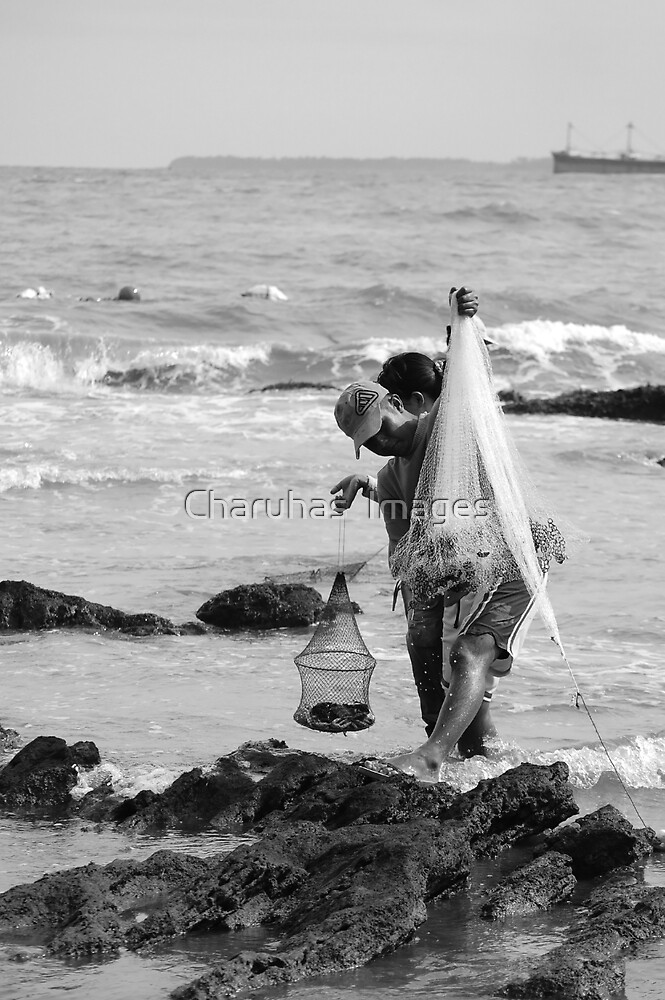 Catch Of The Day by Charuhas  Images