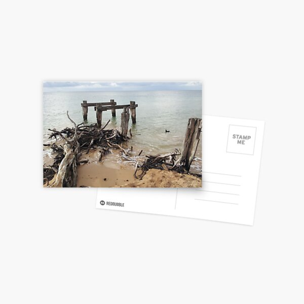 Old pier, driftwood, ocean at Point Nepean, Victoria, Australia Postcard