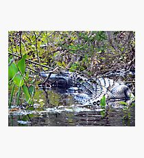 Swimming With the Gator Photographic Print