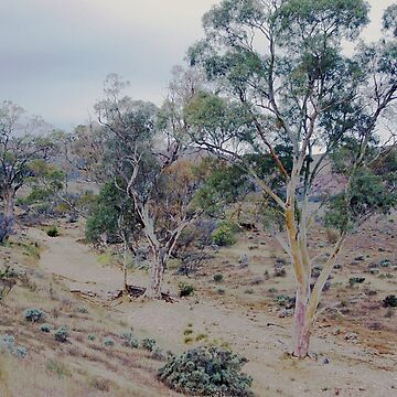 Dry creek bed, Flinders Ranges by imaginethis