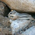 Chipmunk wonder ! fun by Bonnie Pelton