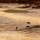 Dolphins at Play by Peter Evans