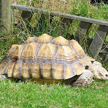 Giant Tortoise by brucemlong