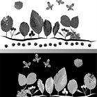 Silver Autumn Scene by cuprum