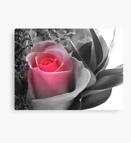 A Touch Of Pink... Canvas Print