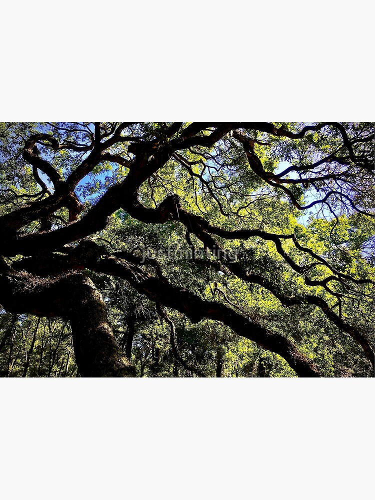Angel Oak Arms by justminting