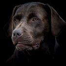 doggie by Nicole W.