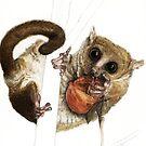 Munching Mouse Lemur by Joel Borgerson