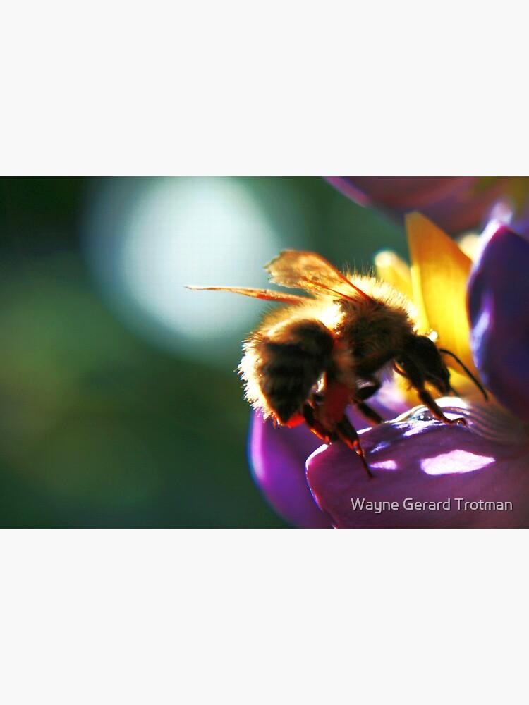 Bumblebee by redmoondragon