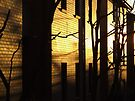 Sunrise - Sydney University Village by Paul Todd